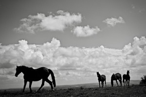 Four Horses – Photo by David Whyte